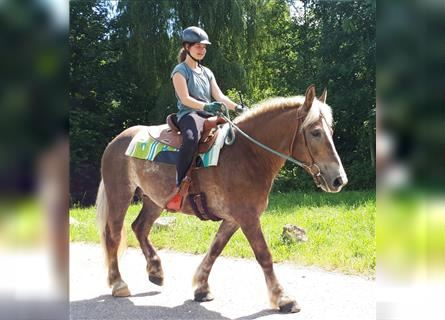 Other Breeds, Mare, 3 years, 15.1 hh, Chestnut-Red