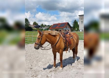 Other Breeds, Mare, 10 years, 14.2 hh
