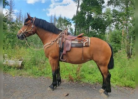 Other Heavy Horses, Mare, 8 years, 16 hh, Brown
