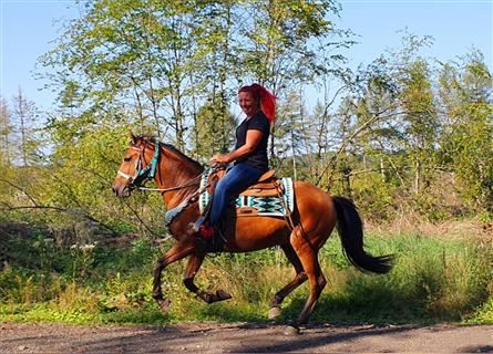 Other Breeds, Mare, 10 years, 14.3 hh, Brown