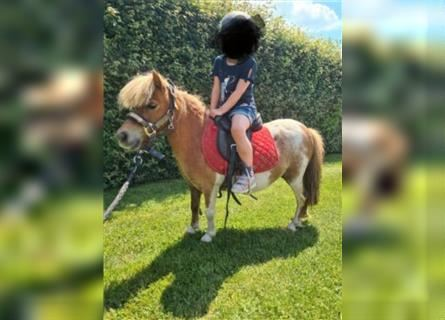 More ponies/small horses, Mare, 9 years, 7.1 hh