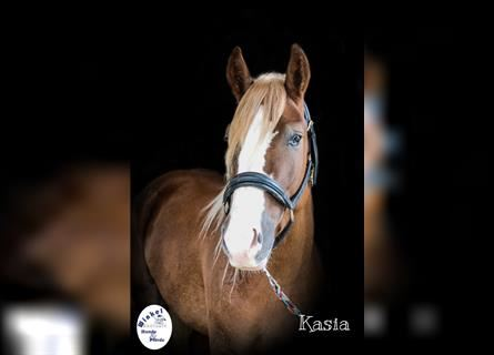 More ponies/small horses Mix, Mare, 4 years, 14.2 hh, Chestnut-Red