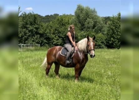 Other Heavy Horses Mix, Mare, 7 years, 15.2 hh, Chestnut