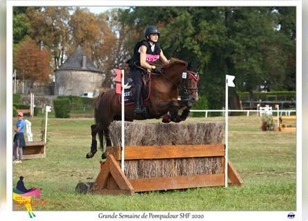 French riding pony, Mare, 7 years, 14.1 hh, Chestnut