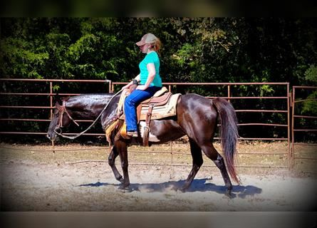 Paint Horse Mix, Mare, 12 years, 14.2 hh