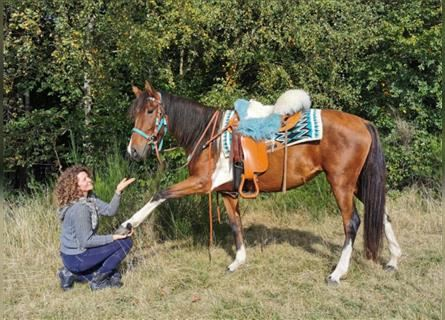 More ponies/small horses, Mare, 4 years, 14.2 hh, Pinto