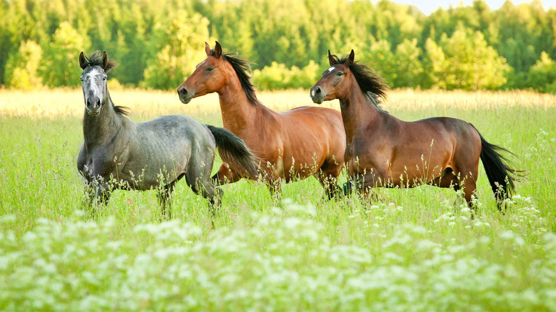 Image Kwpn - Hungarian-sport-horse-breeders-association