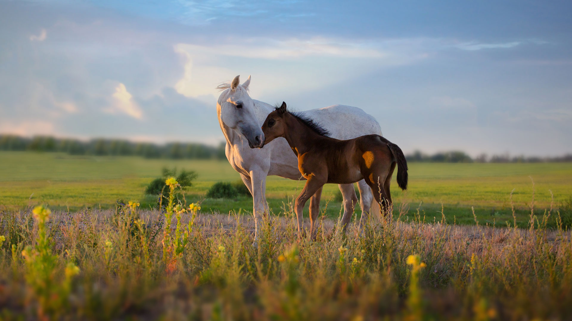 Image Offer and find Foals