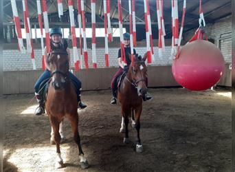 Freiberger, Mare, 4 years, 15.1 hh, Brown