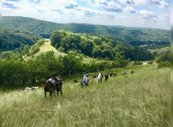 Ride with clients  on Transylvanian Hills