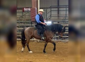 Rocky Mountain Horse, Mare, 9 years, 15 hh, Roan-Bay