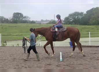 Other Thoroughbreds, Mare, 17 years, 16.1 hh, Roan-Red