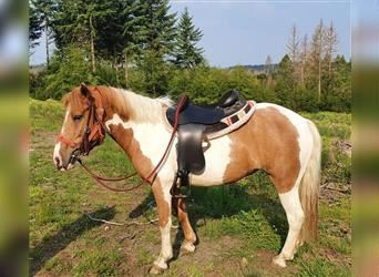 Pintos, Mare, 4 years, 12.2 hh, Pinto