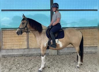 More ponies/small horses, Mare, 10 years, 15.1 hh, Pinto