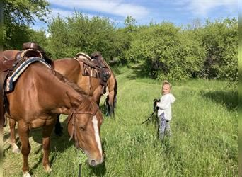 American Quarter Horse, Mare, 9 years, 14.2 hh, Chestnut-Red