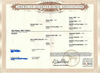 American Quarter Horse, Stallion, 3 years, 14.1 hh, Roan-Red