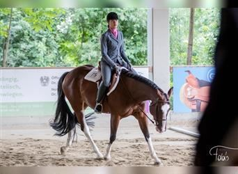 American Quarter Horse, Mare, 8 years, 15.2 hh