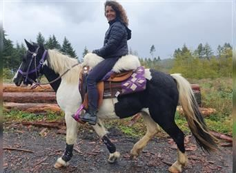 Gypsy Horse Mix, Mare, 13 years, 13.2 hh, Pinto