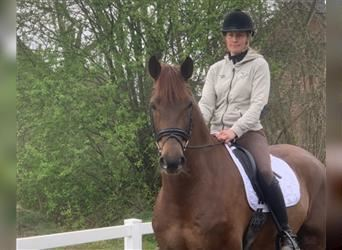 German Riding Pony, Mare, 3 years, 13.2 hh, Chestnut-Red
