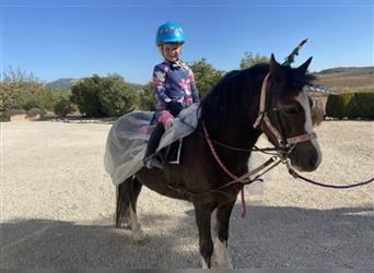 Welsh A (Mountain Pony), Mare, 7 years, 11.2 hh, Chestnut