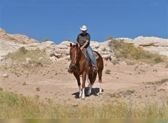 Paint Horse, Mare, 4 years, 15 hh, Sorrel