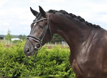 Mare 3 years