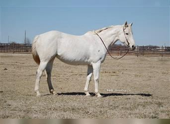 Other Thoroughbreds, Mare, 14 years, 15.1 hh, Gray
