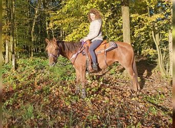 Quarter Pony Mix, Mare, 8 years, 14.2 hh, Chestnut-Red