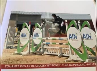 French riding pony, Mare, 7 years, 14.2 hh, Gray