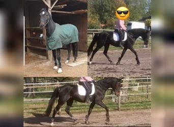 Mare 6 years