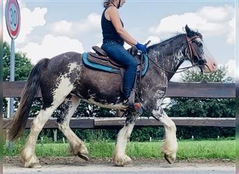 More ponies/small horses, Mare, 5 years, 13.2 hh, Overo-all-colors