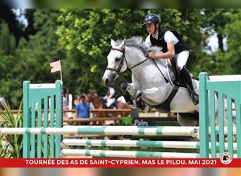 French riding pony, Mare, 10 years, 14.2 hh, Gray