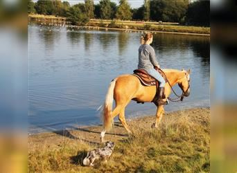 American Quarter Horse Mix, Mare, 4 years, 14.2 hh, Palomino