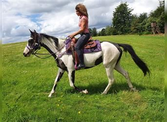 Paint Horse, Mare, 6 years, 14.3 hh, Overo-all-colors