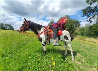 Paint Horse, Mare, 15 years, 14.3 hh, Overo-all-colors