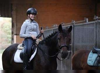 Hungarian Sport Horse, Mare, 7 years