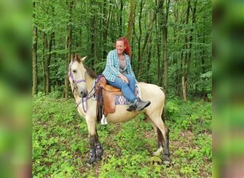 More ponies/small horses, Mare, 6 years, 14.2 hh, Dun