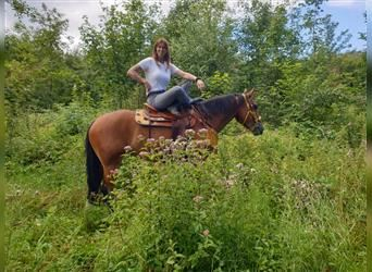 Heavy Warmblood, Mare, 4 years, 16.2 hh, Brown