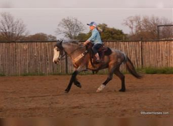 More ponies/small horses, Mare, 18 years, 12 hh, Roan-Bay