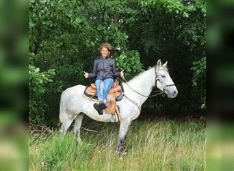 More ponies/small horses, Mare, 9 years, 14.2 hh, Gray