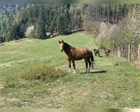 Annonce cheval
