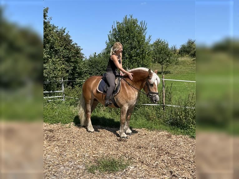 Other Heavy Horses Mix Mare 5 years 14,2 hh Chestnut-Red