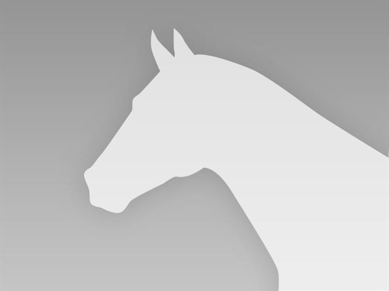 Paint Horse Hengst Roan-Red