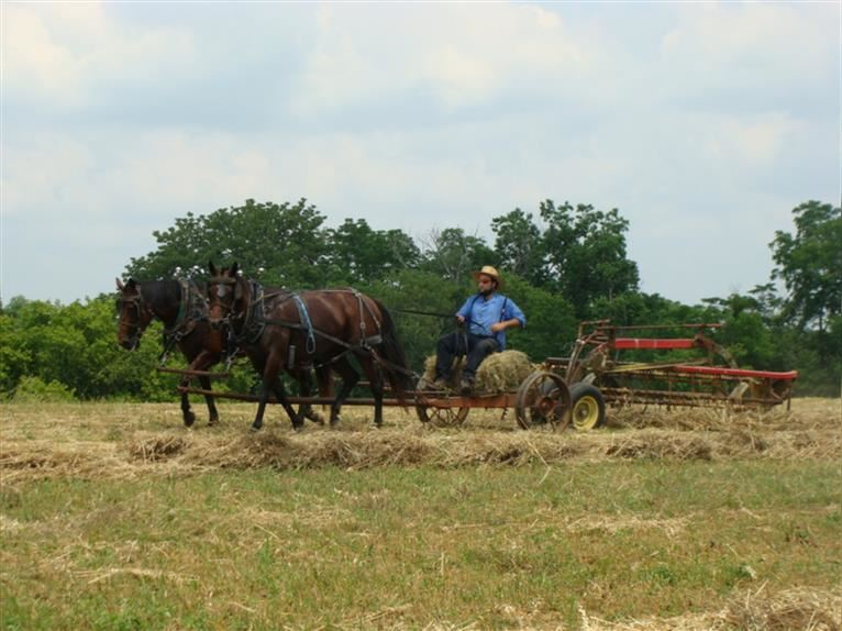 Quarter Horse Mare 9 years 15,1 hh Bay