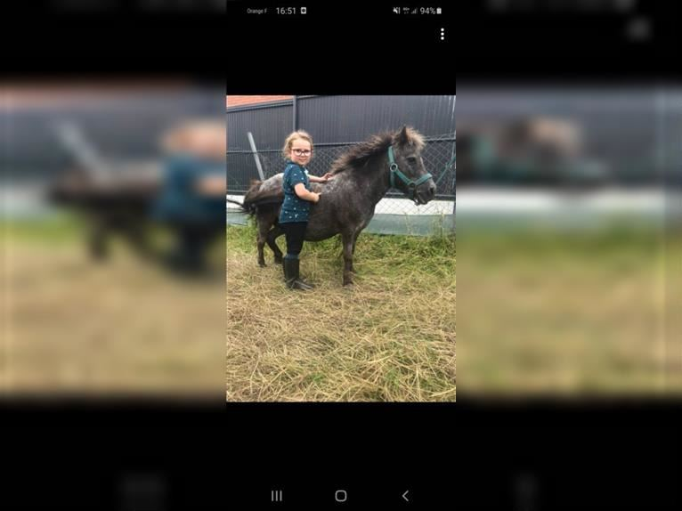 More ponies/small horses Mare 9 years 8,1 hh