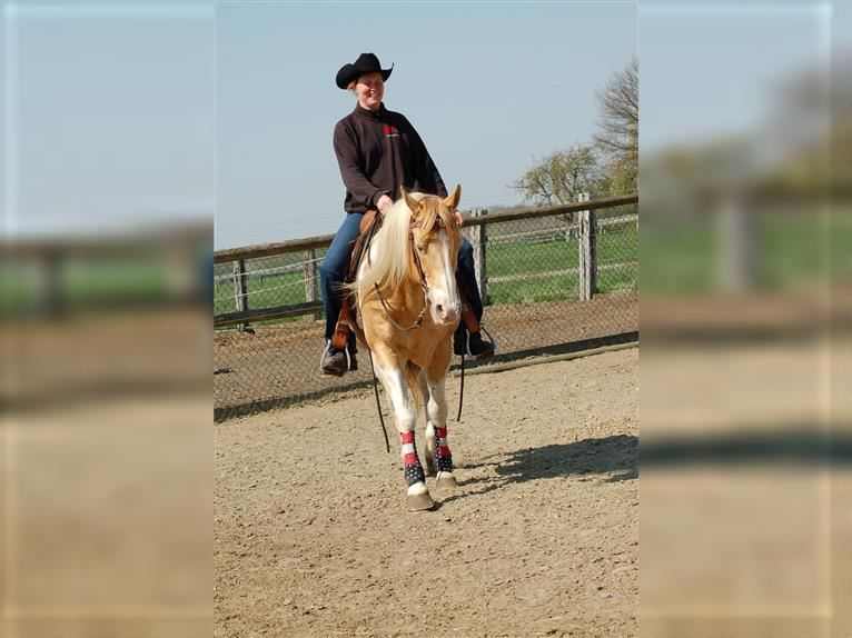 INDIAN BIGSTEP Paint Horse Stallion Champagne