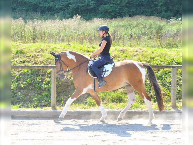 Other Warmbloods Mare 3 years 15,3 hh Pinto