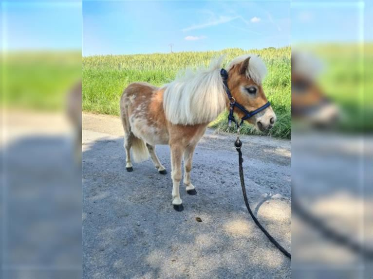 More ponies/small horses Mare 3 years