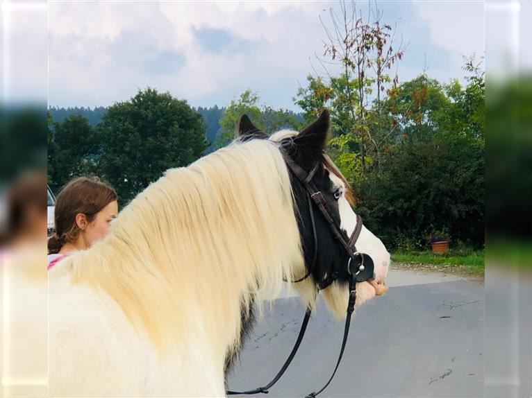 Gypsy Horse Mare 11 years 14,2 hh Pinto